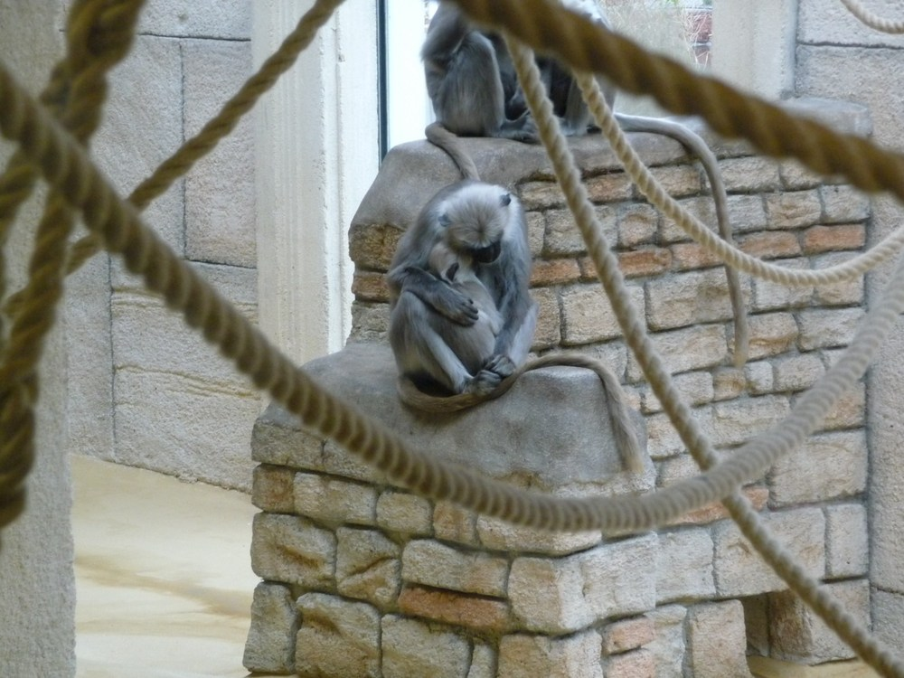 Einige Impressionen aus der Themenwelt #Asien im #Zoom #Gelsenkirchen