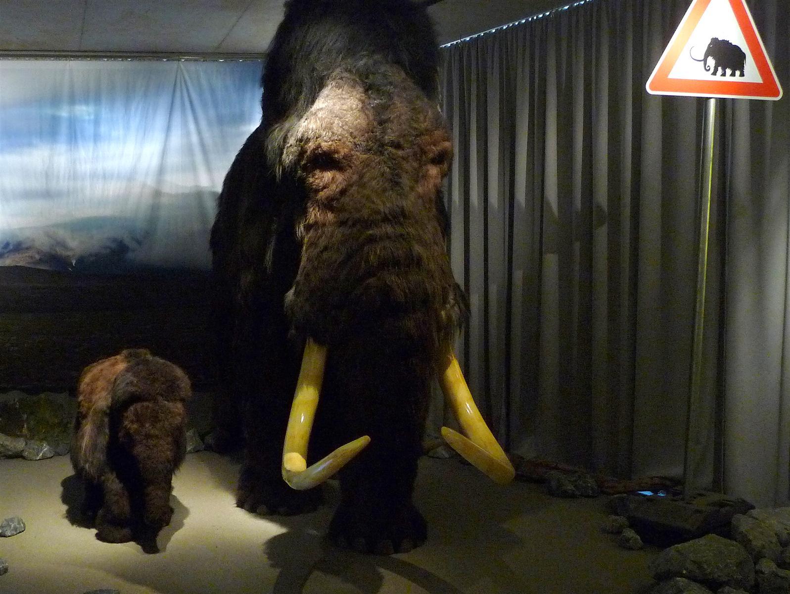 Vorsicht Mammut!