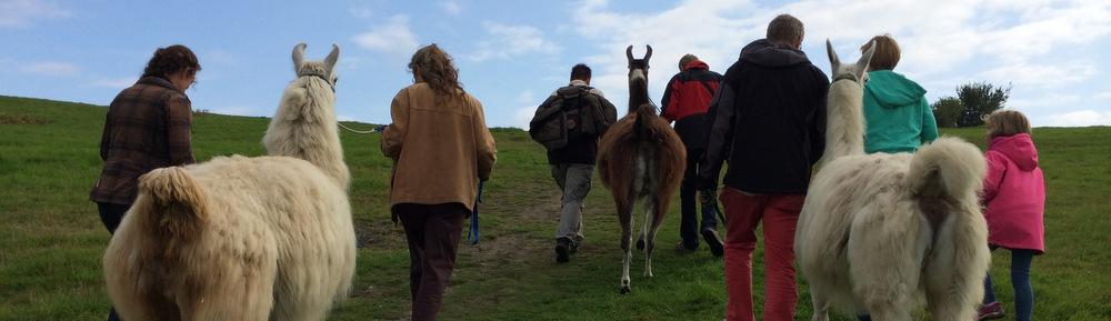 Halde Rungenberg – mit Lamas durch die Anden des Ruhrgebiets