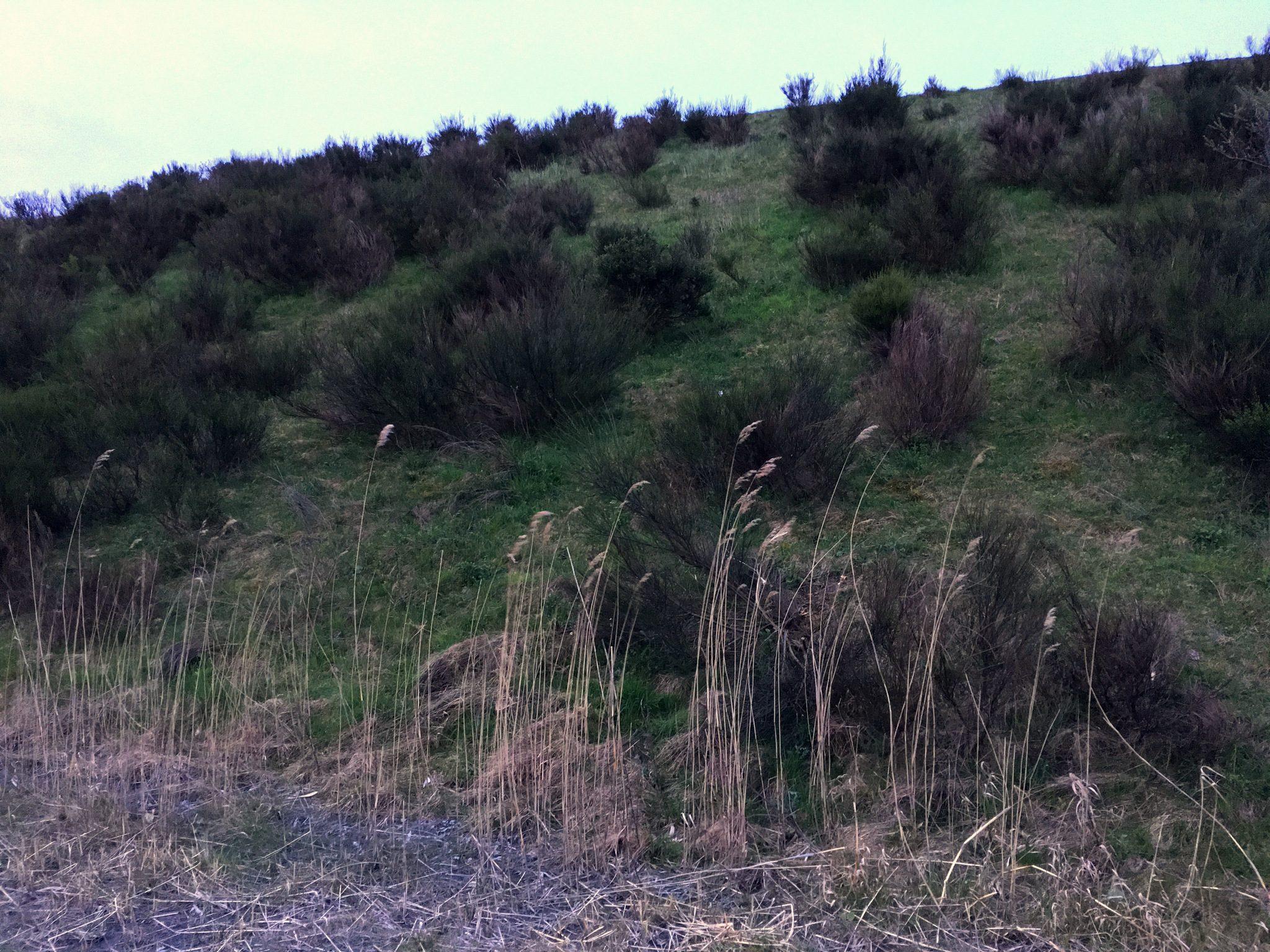 Die Vegetation ändert sich. Hier kann sich schon mal der ein oder andere Vogel verstecken.