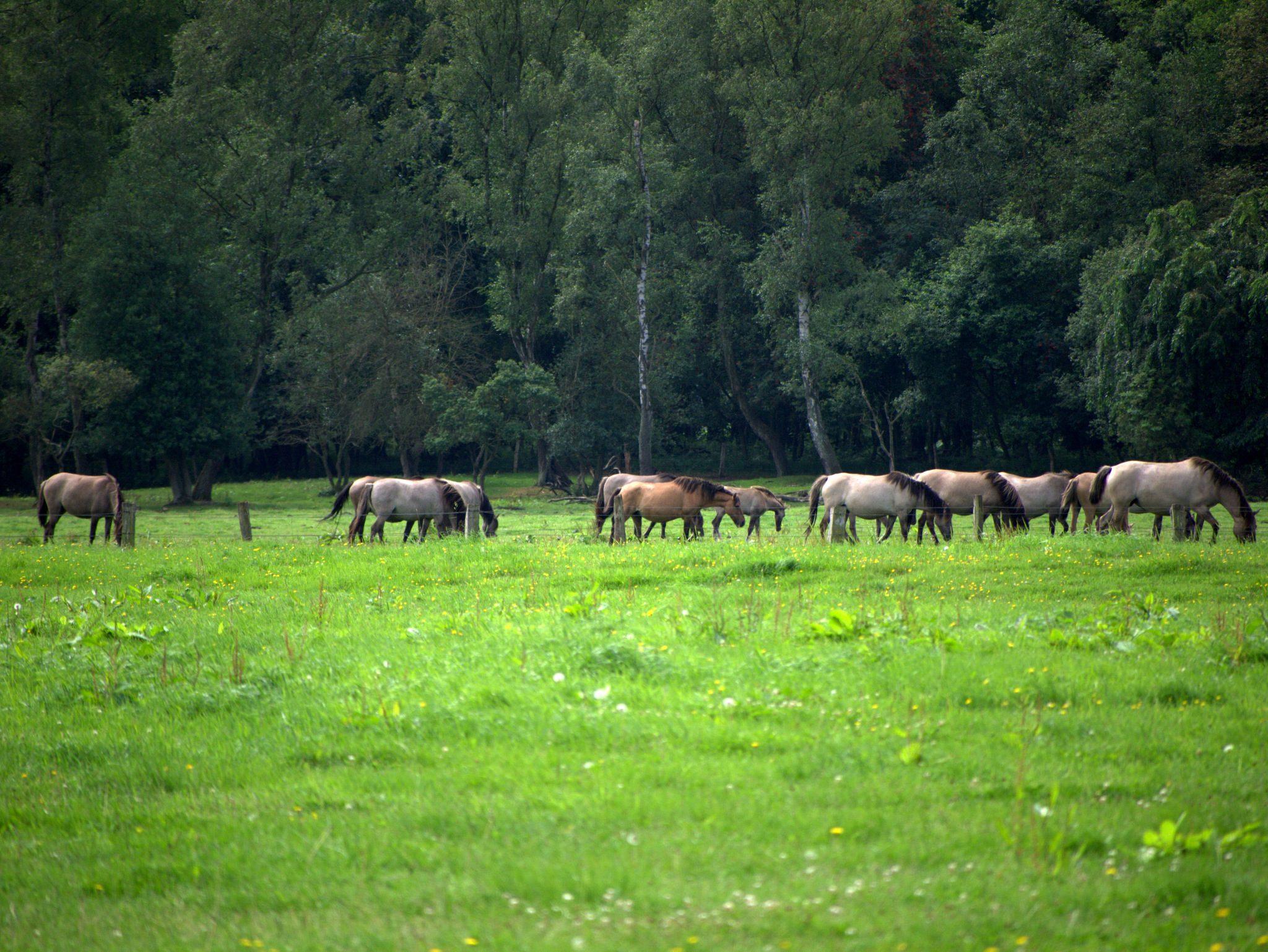 01-Wildpferde-P1240145