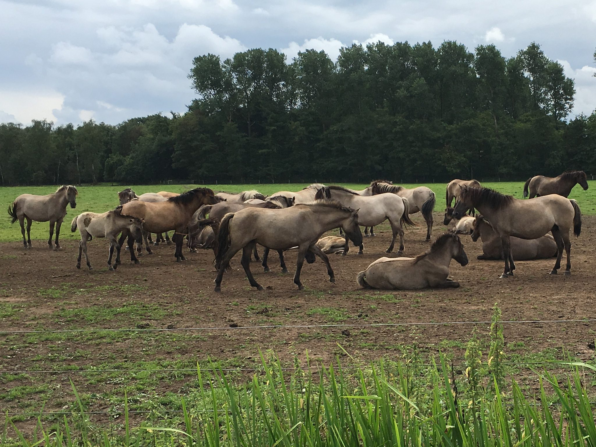 15-Wildpferde-IMG_4988