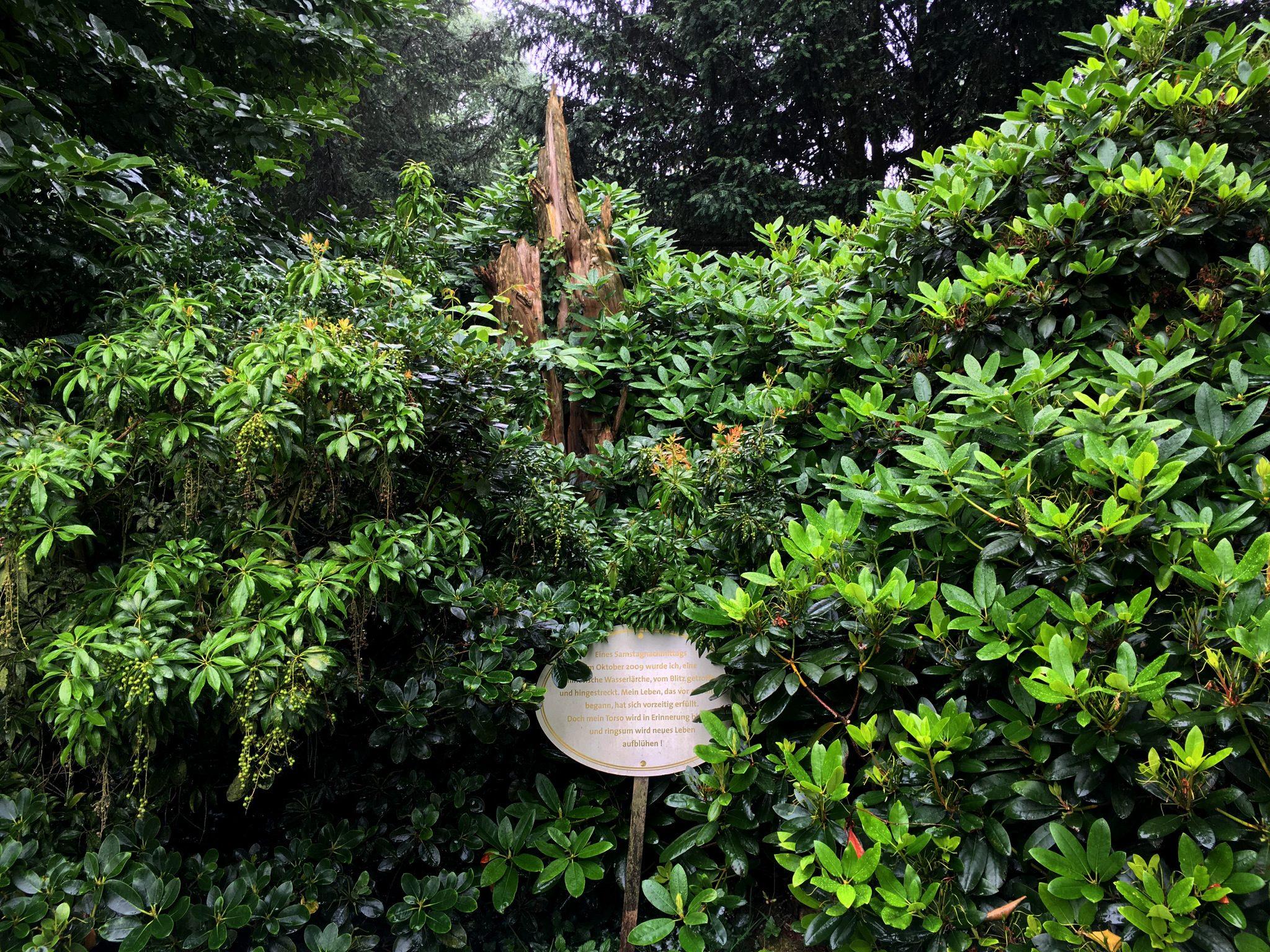 Arboretum2016_07-IMG_4634
