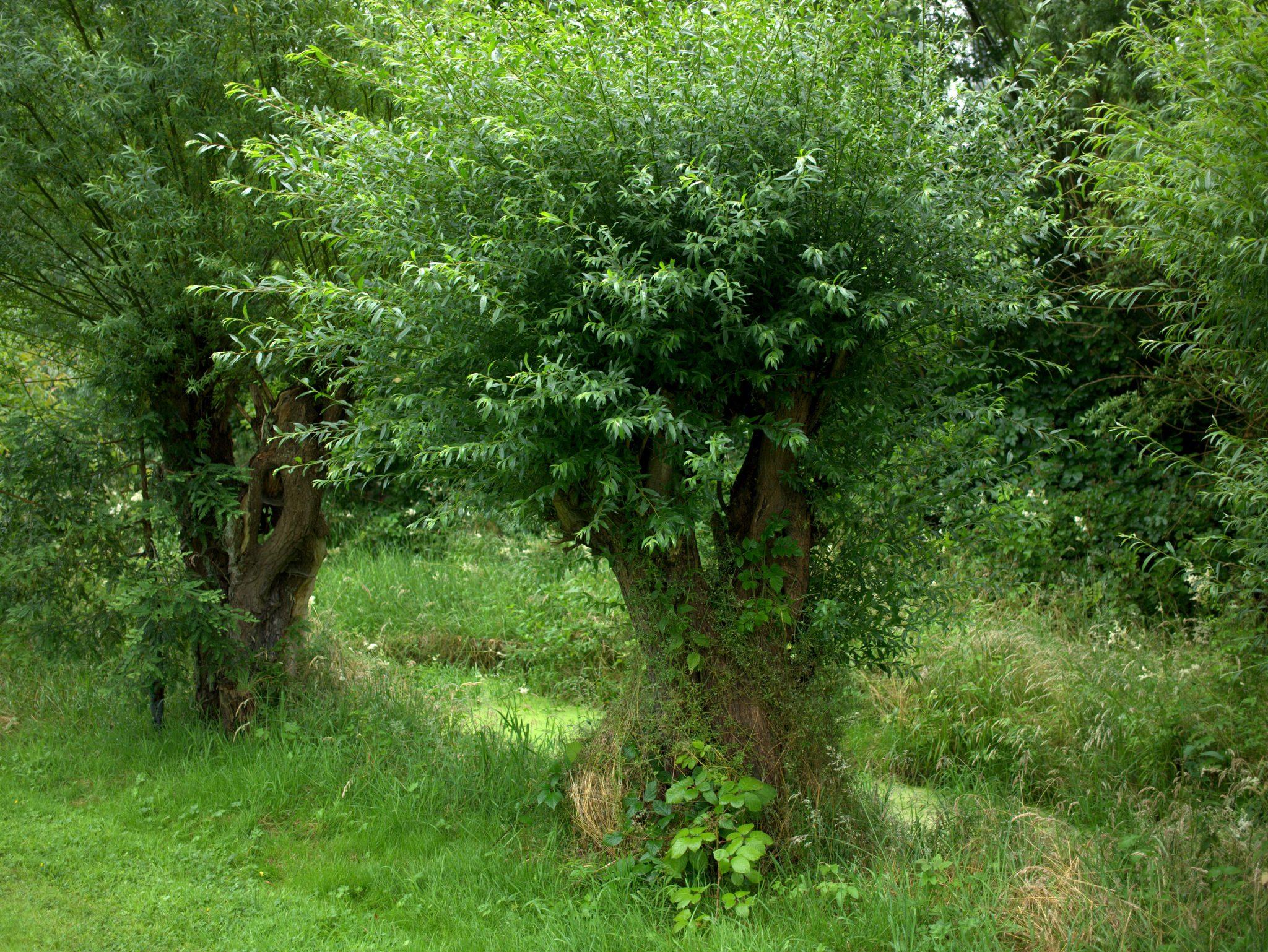 Arboretum2016_09-P1230930
