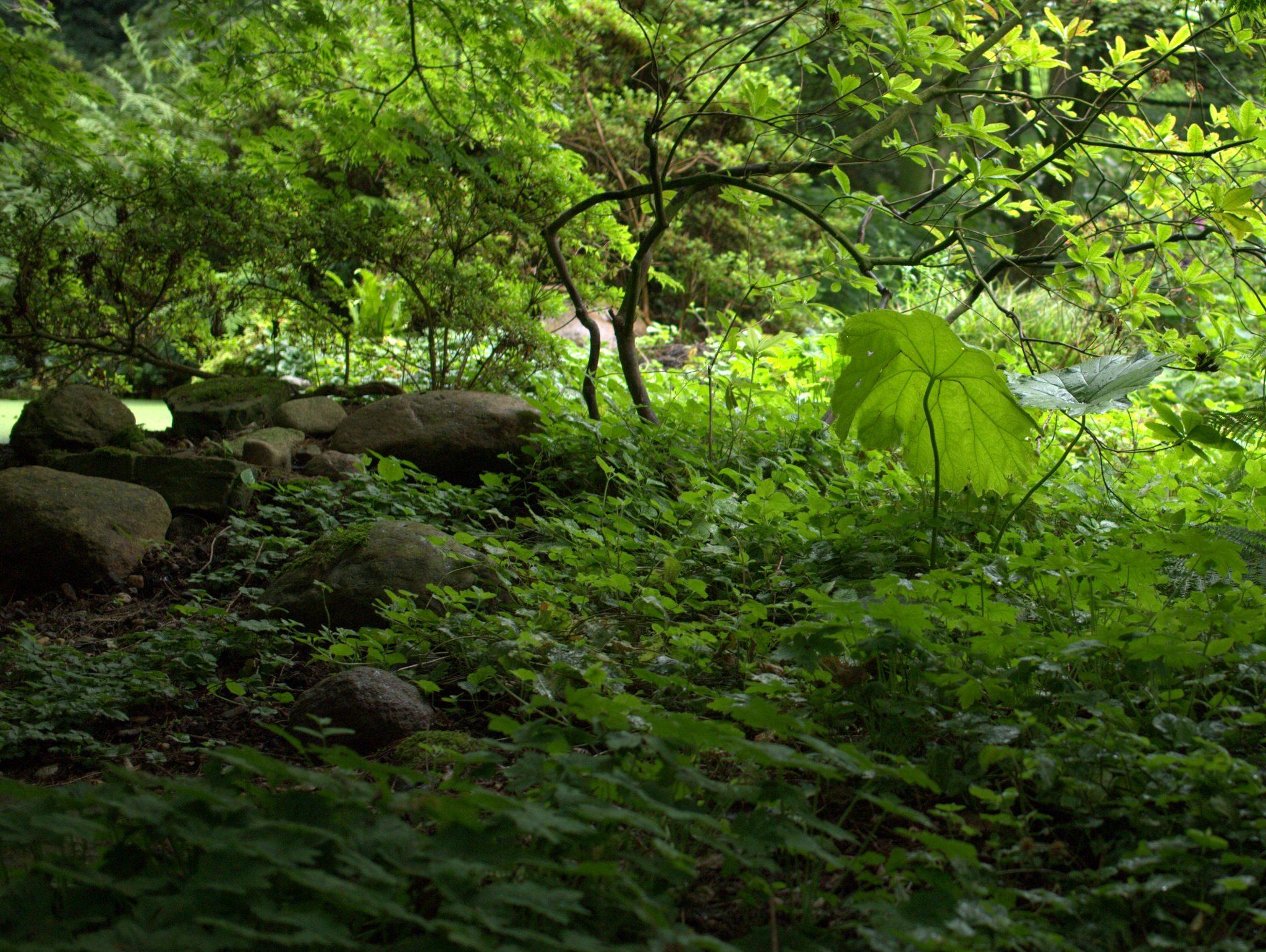 Arboretum2016_16-P1230963