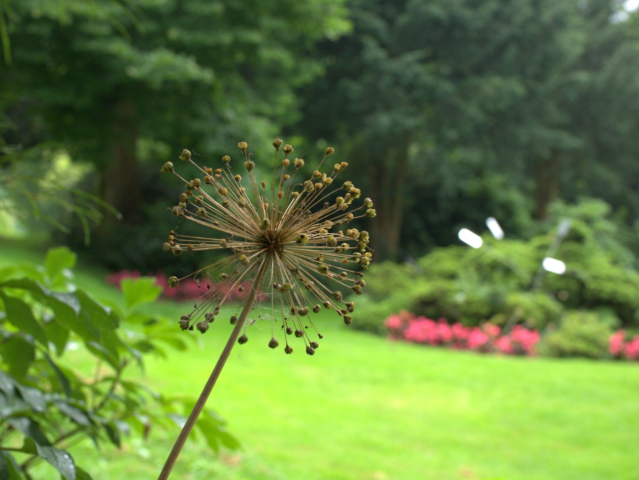 Arboretum2016_20-P1230984