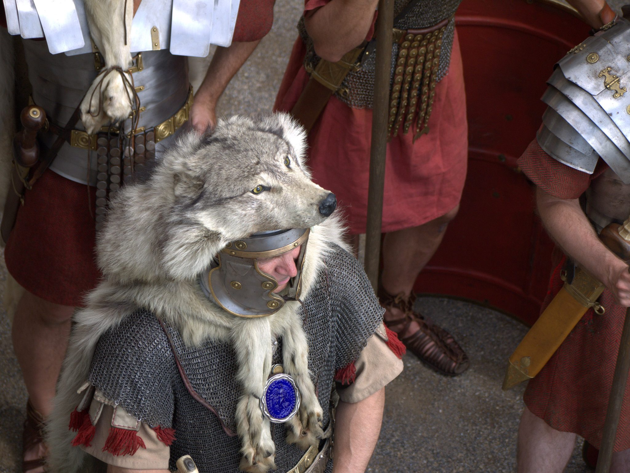Er hat's drauf - einen Wolf!