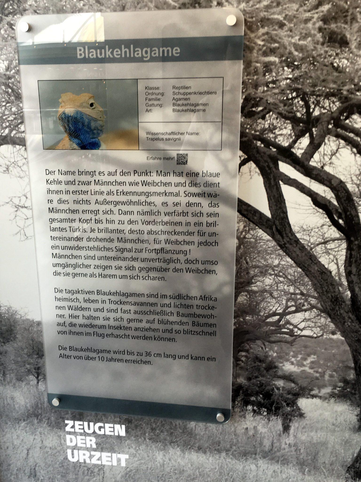 Großformatige Informationen neben jedem Terrarium.