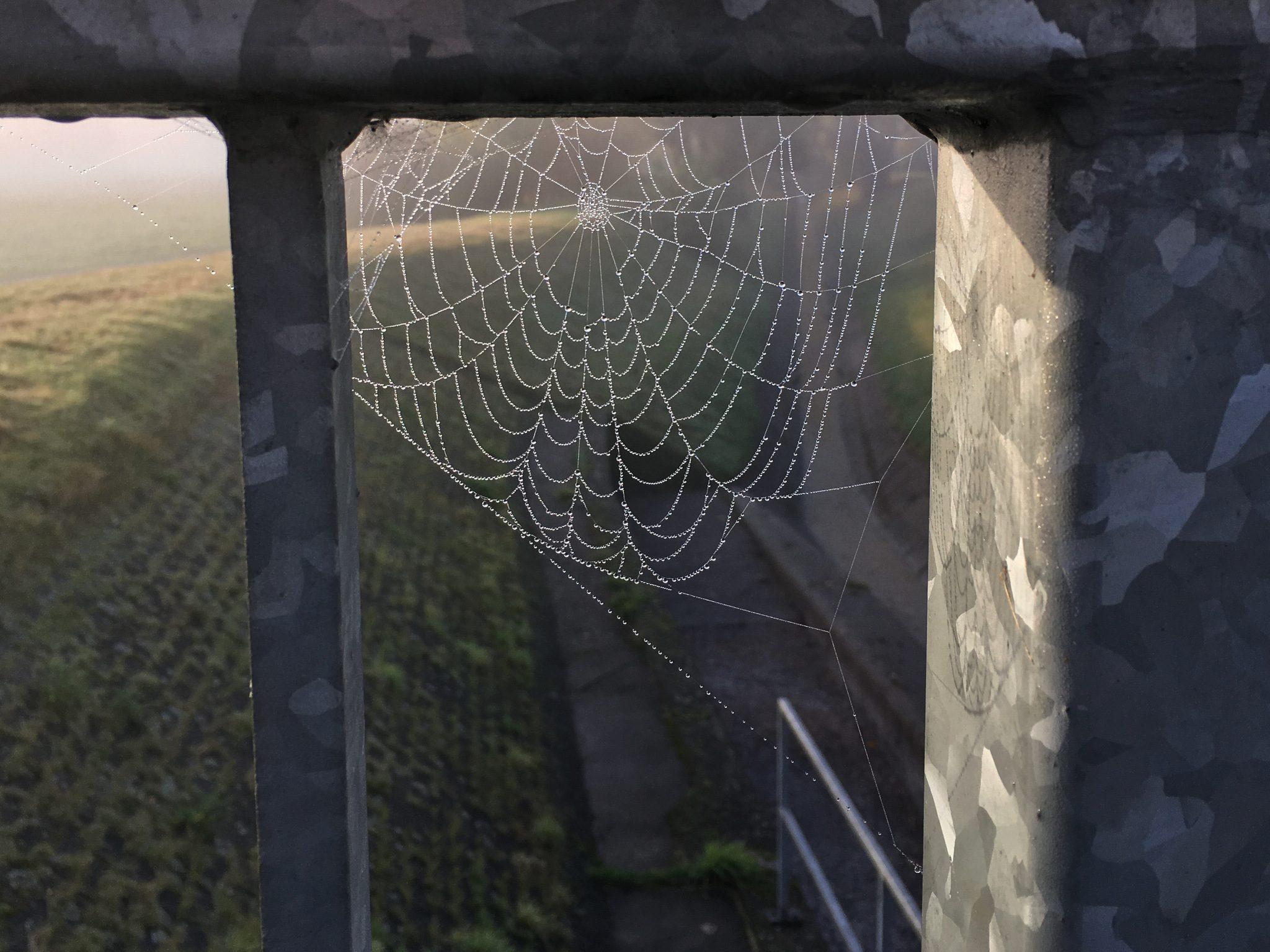 Spinnennetz im Morgentau.