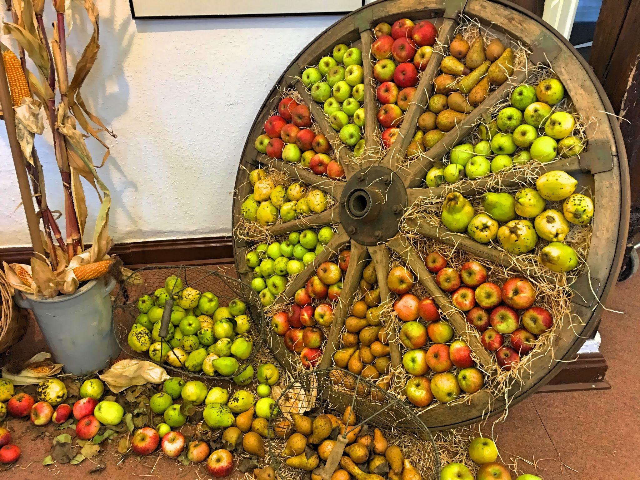 Ein wundervolles Apfel-Birnen-Rad!