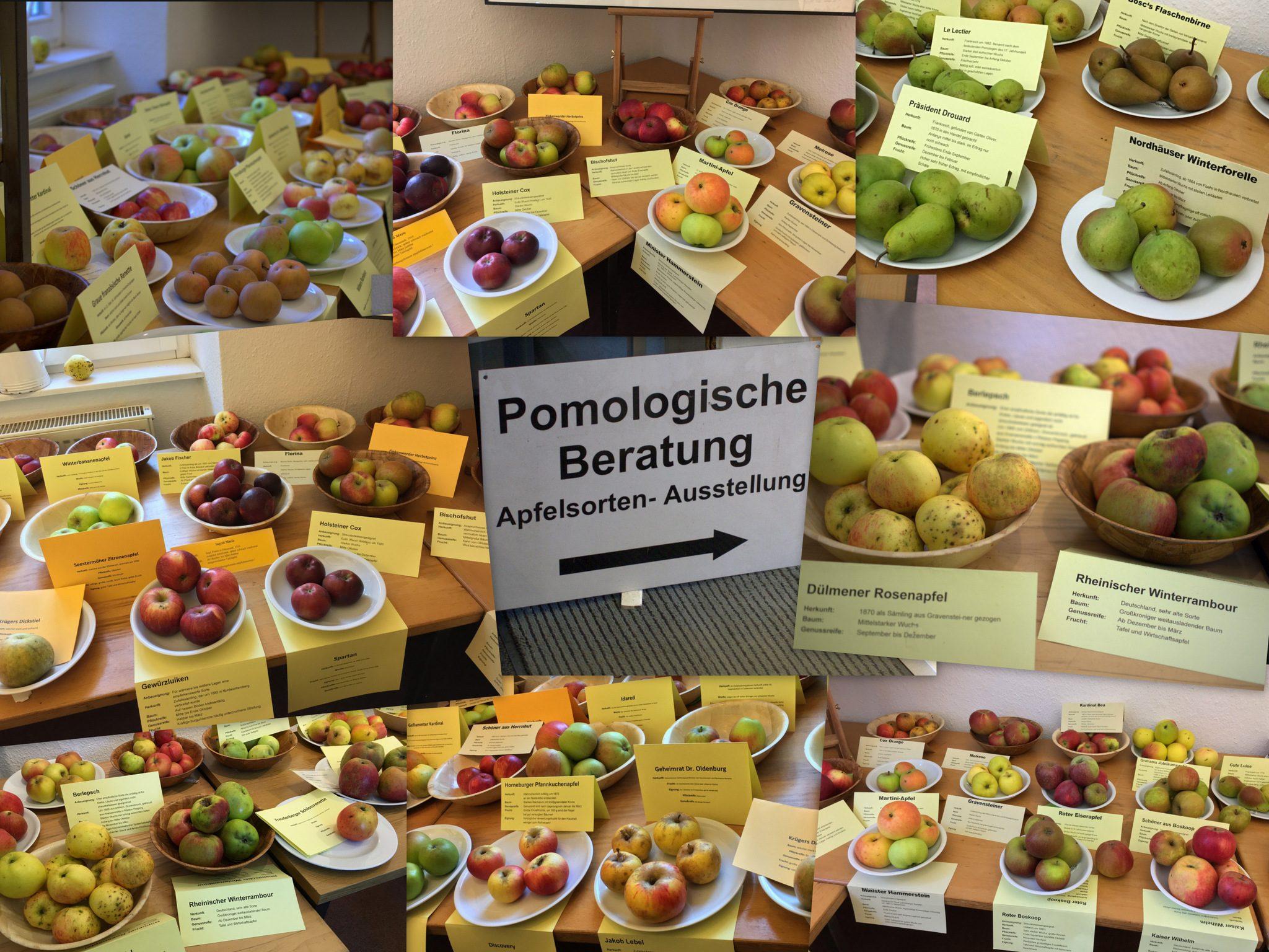 Pomologische Beratung und großartige Apfel- und Birnenausstellung.