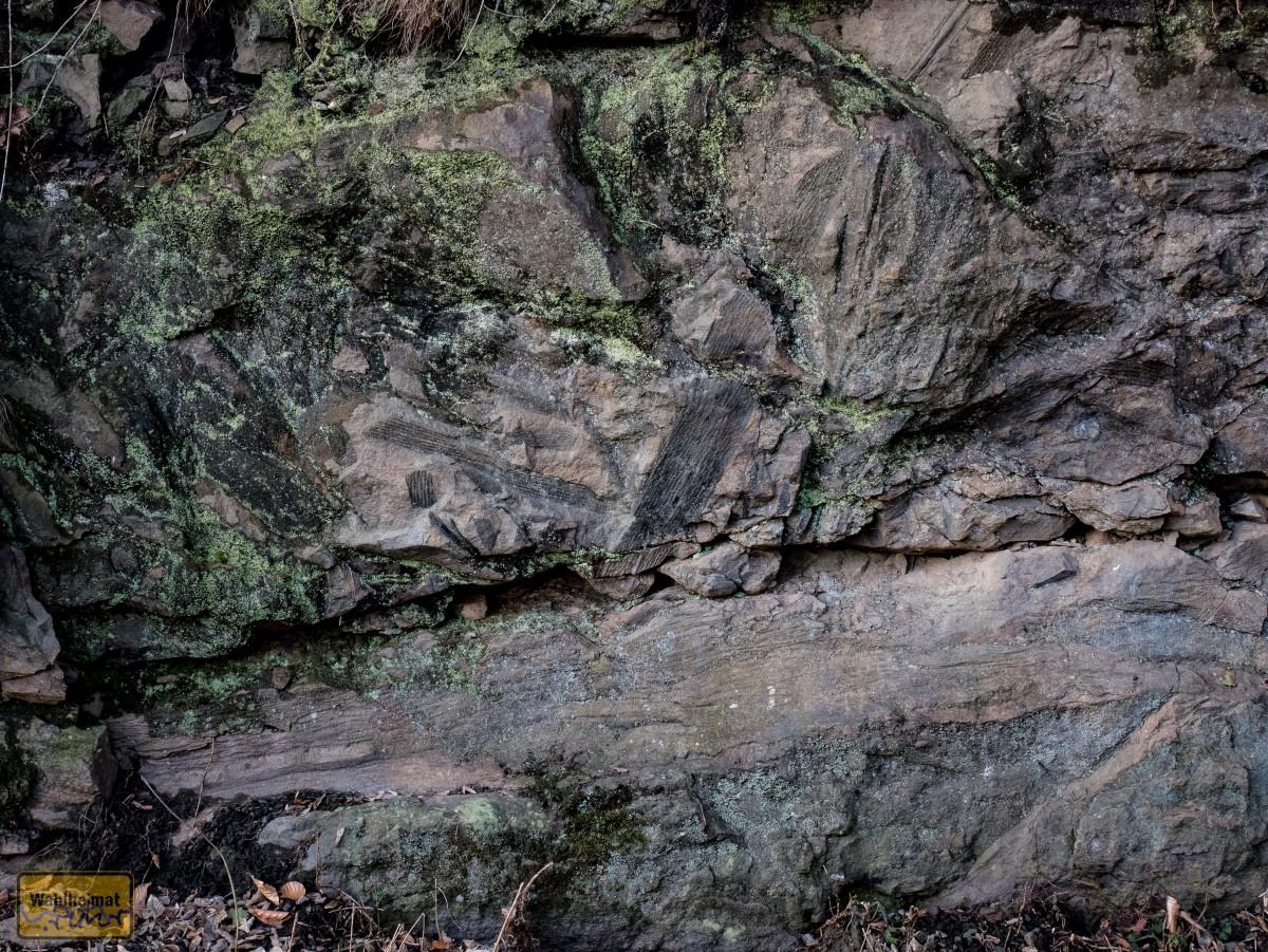 Hier lag wohl mal ein Baum. Vor schlappen 320 Millionen Jahren.