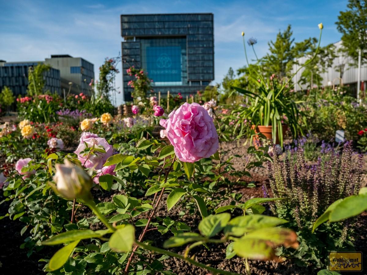 ...auch schöne Beete mit Rosen und vielen anderen Blühpflanzen sind vorhanden...