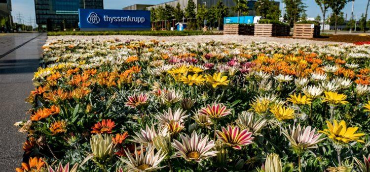 Grüne Achse vor thyssenkrupp – ein Garten auf Zeit für die Grüne Hauptstadt Essen