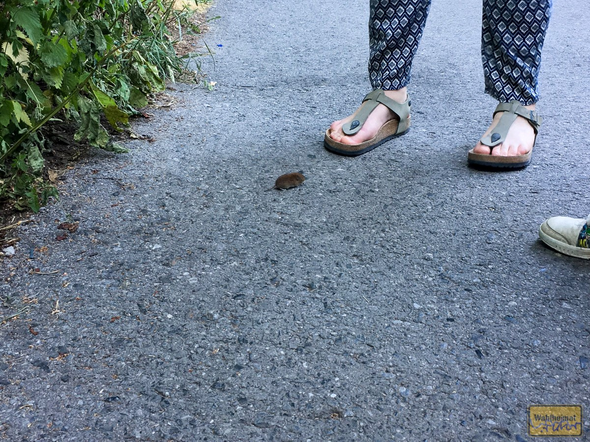 Auch die Mäuse sind eher gechillet...