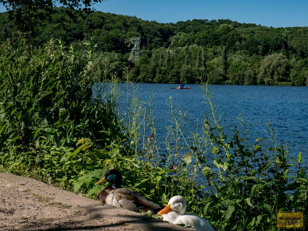 Mensch und Tier chillen am Ufer.