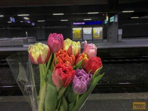 Dankeschön für die Blumen!