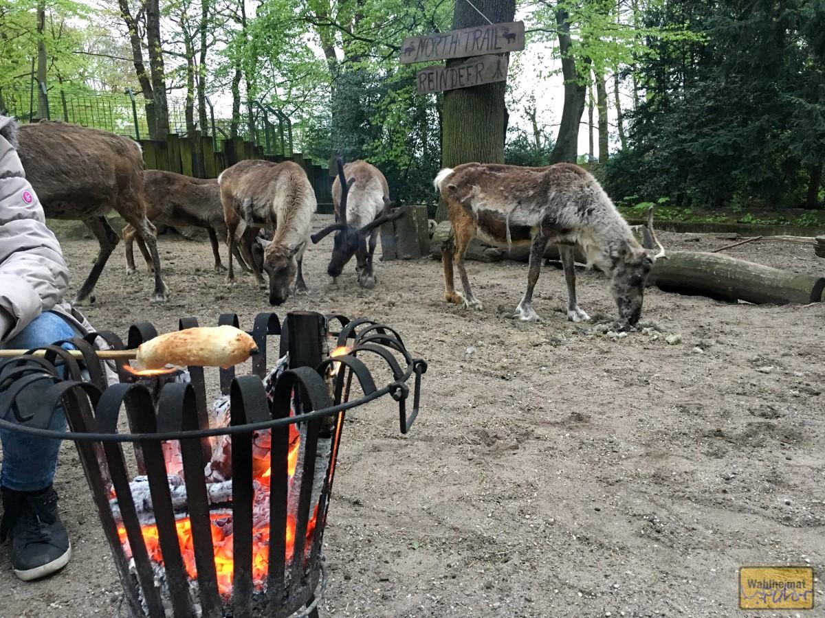 Wie cool ist das denn? Inmitten einer Herde Rentiere wird über offenem Feuer Stockbrot gebacken!