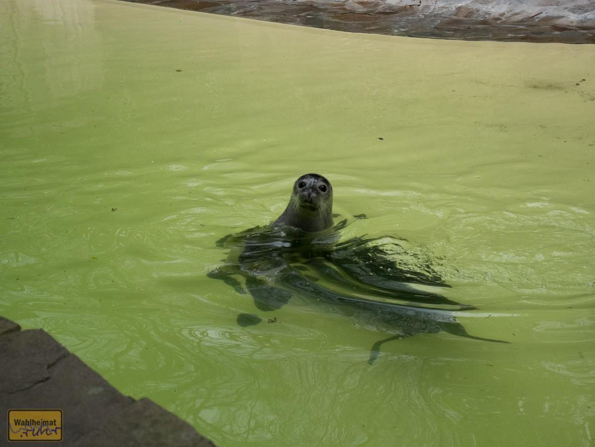 Die Robben haben ne ordentliche Fettschicht und können so die Kälte auch ganz gut ab!