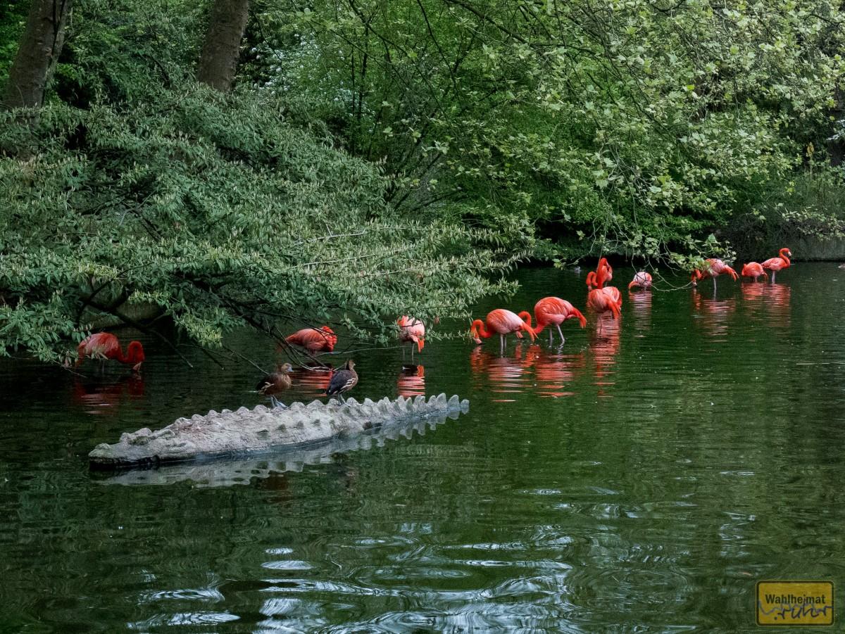 Nach zweieinhalb Stunden geht's zurück zum Haupteingang - die Flamingos stehen mittlerweile aus Schutz vor dem Fuchs im Wasser.