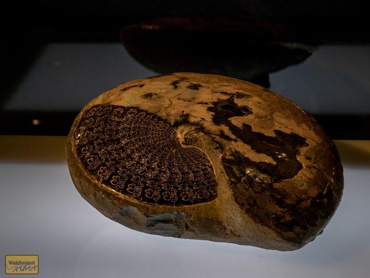 Versteinerte Fossilien mit tollen Mustern!