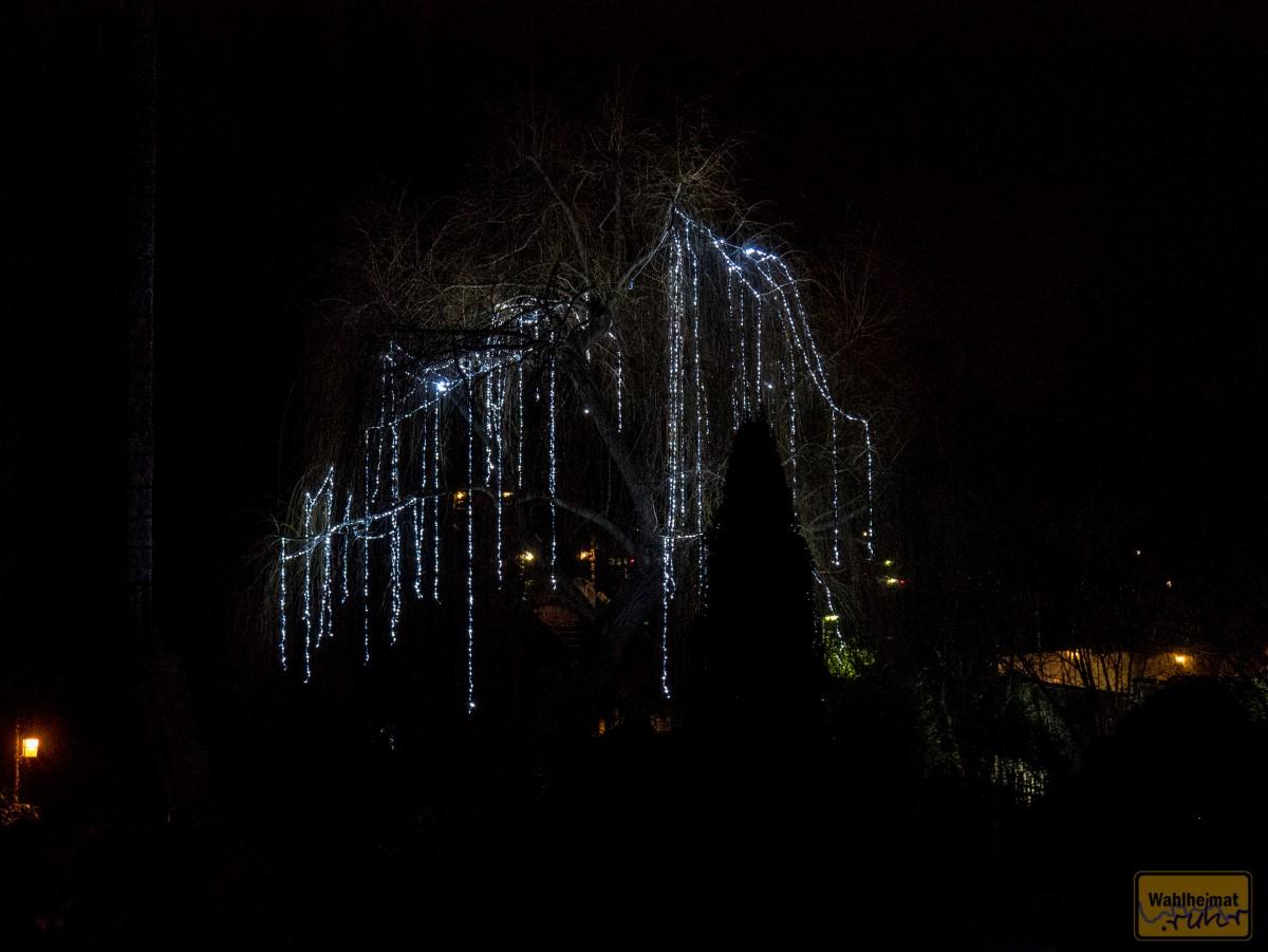 Auf dem Weg zum Parkplatz ein lichtdurchflossener Baum. Schön war's!