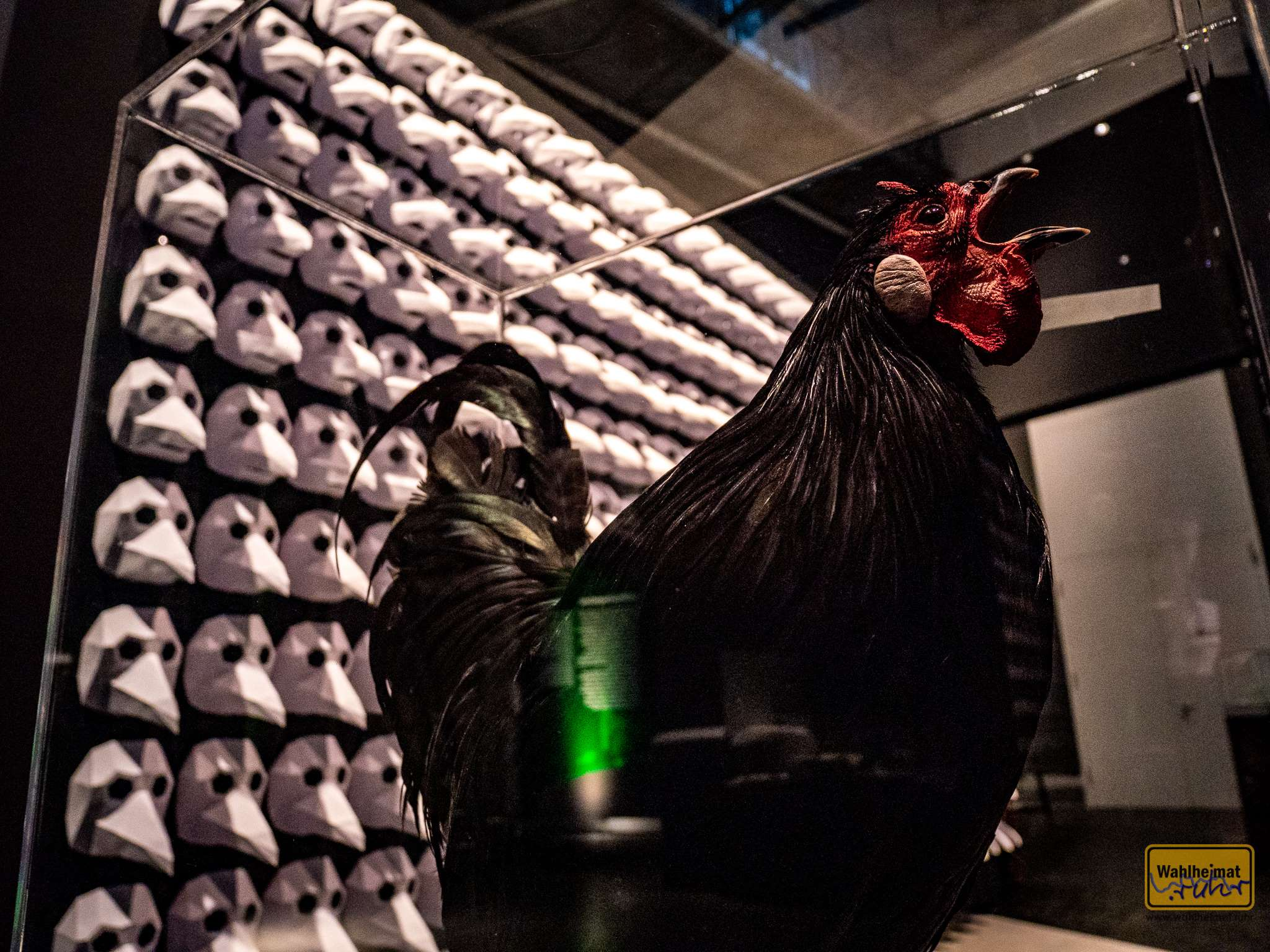 Oh, noch ein schlechtes Omen - der schwarze Hahn!