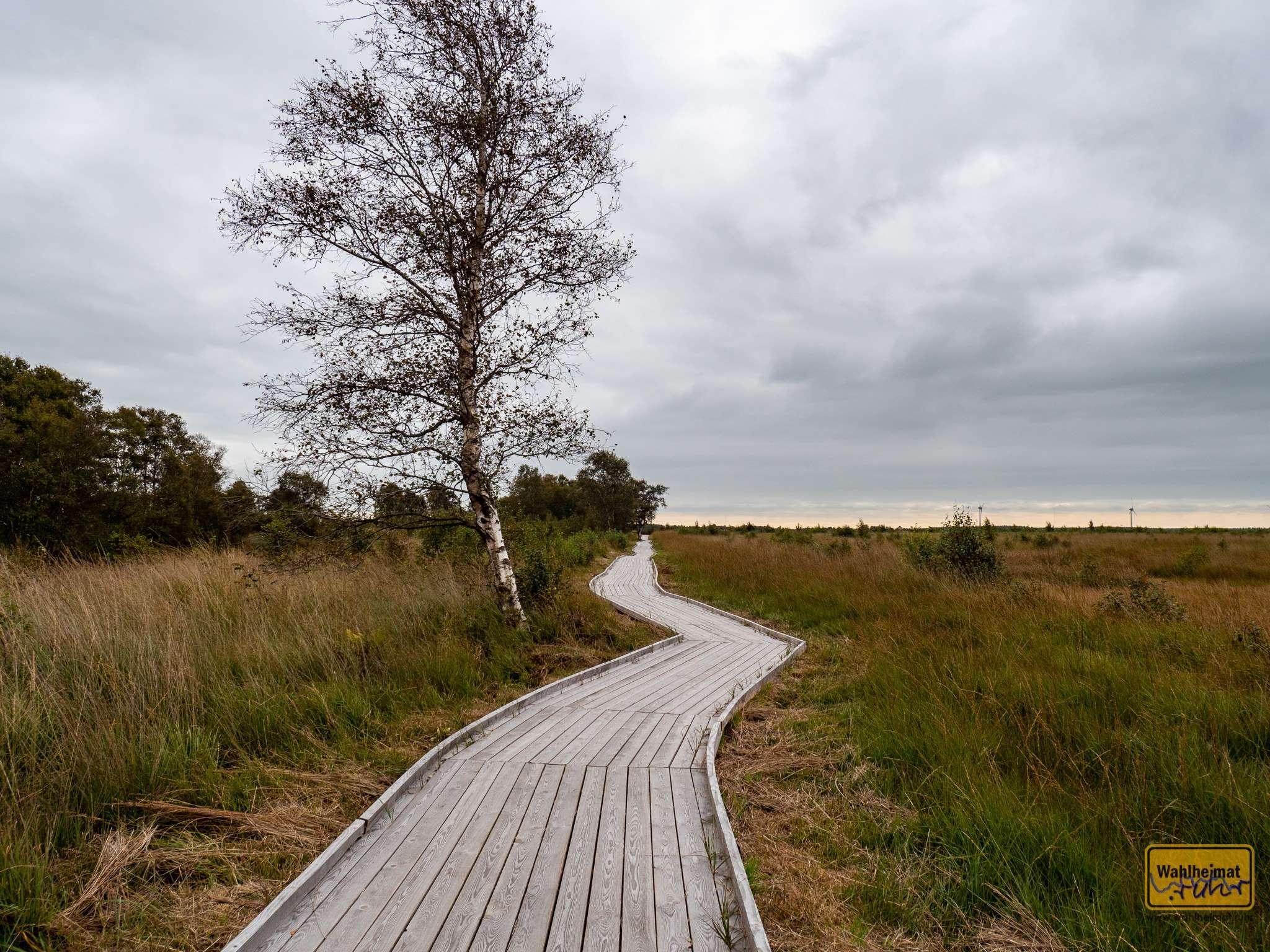 Ein Bohlenweg führt durch das Moor.