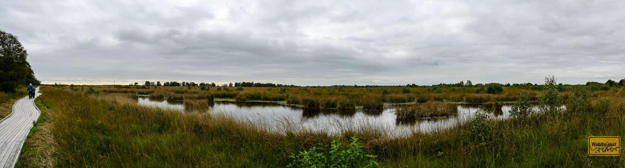 Typisch für so ein Moor: recht viel Wasser.
